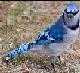 Birdybop