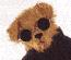 Bear1970